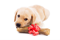 Puppy with bone and ribbon