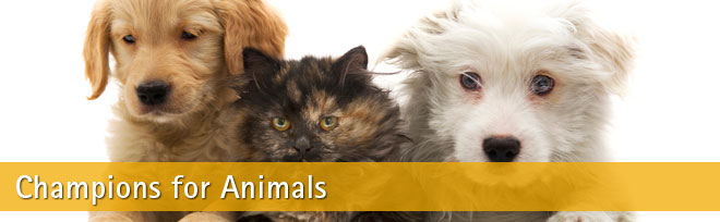 Champions for animals