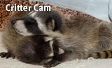 160-x-98-badge_crittercam_May2019.png