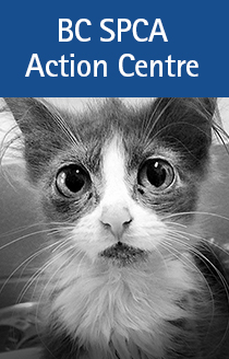 Action-Center-side-banner-210---sad-cat.jpg