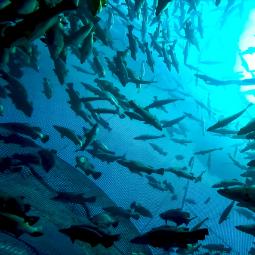 FarmSense sub-story - fish farming.png
