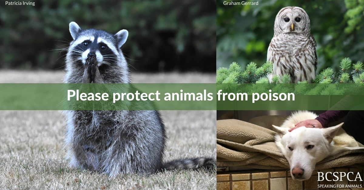 Protect animals from poison