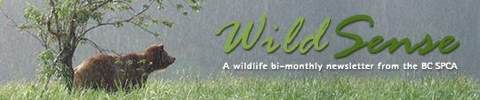 WildSense-Header-Banner2.jpg