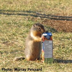 WildSense3_Murray-Peissard_Ground-squirrel-with-juicebox.png