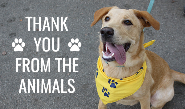 Thank you from the animals!
