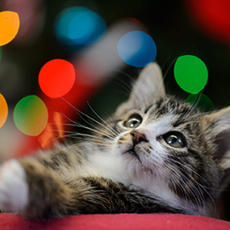 kitten-christmas-tree-decorations-lights.jpg