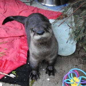 Photo of Otter at Wild ARC